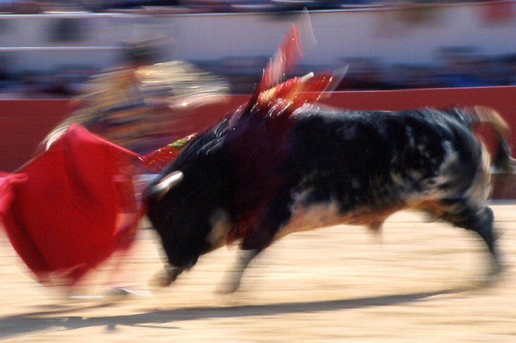 08 Toro